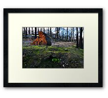 Hope Amidst Destruction Framed Print