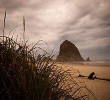 Grassy Haystack by Jenny Miller