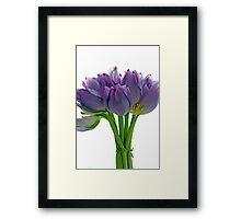 Lavender Tulips Framed Print