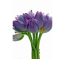 Lavender Tulips Photographic Print