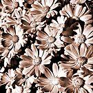 Bloomin Heck! by Michael  Bermingham