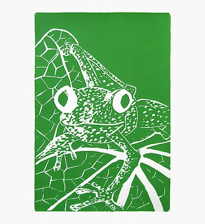 Little Green Tree Frog Photographic Print