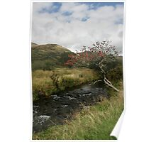 Tree by Stream Poster
