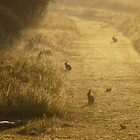 Watership Down by DutchLumix