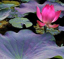 Lotus, Murni's Villas, Bali by JonathaninBali