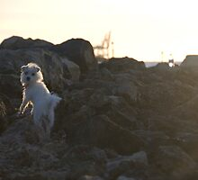 Little Miss Medo On the Rocks by MissSani