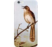 Brown Thrasher Bird Art iPhone Case/Skin