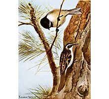 Chickadee and Browns Creeper Photographic Print