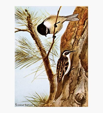 Chickadee and Browns Creeper Photographic Print