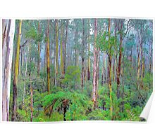 Memories Are Made Of This -Yarra Ranges National Park - The HDR Experience Poster
