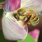 A bee again. by loiteke