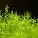 Moss Forest by Sarah-fiona Helme