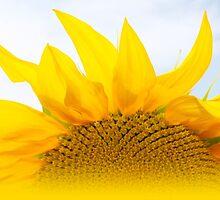 Sunshine of my life by AtelierZiehr