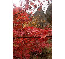 Maple Heaven - Juwangsan National Park, South Korea Photographic Print