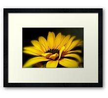 Goldilocks Framed Print