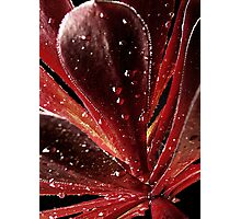 Burgundy Plant Photographic Print