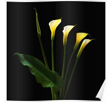 Still Life with Arum Lilies Poster