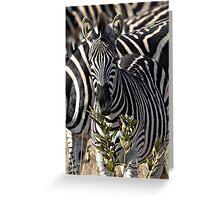 Zebra Stripe Confusion Greeting Card