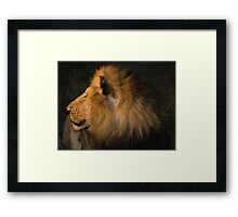 Male Lion Portrait - Night Framed Print