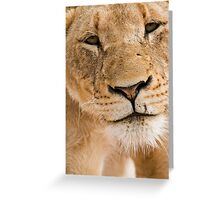 Lioness Close up Greeting Card