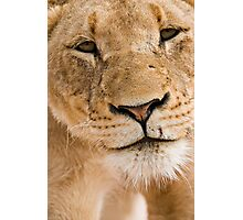 Lioness Close up Photographic Print