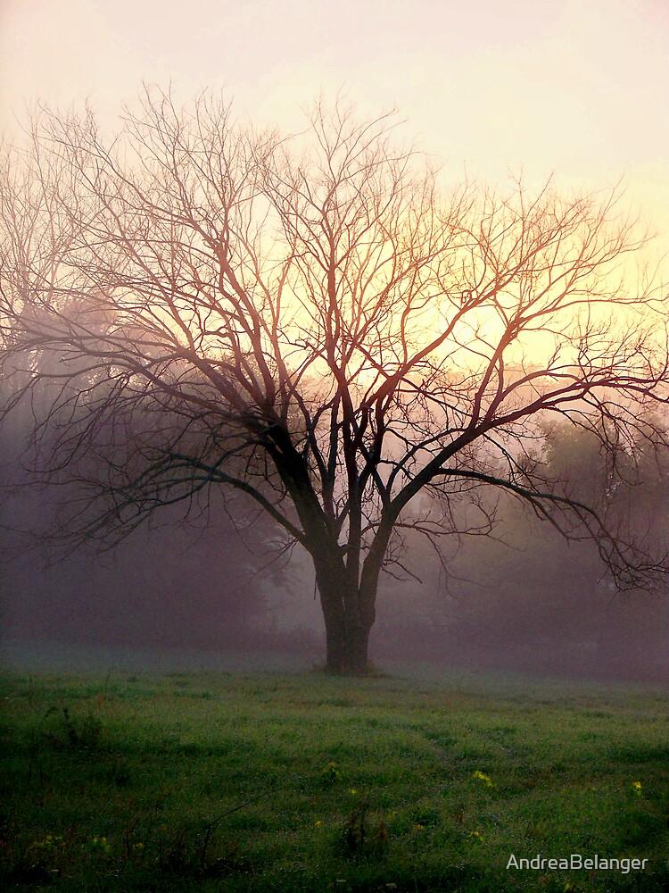 Foggy Day Break by AndreaBelanger
