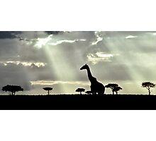 Giraffe Silhouette Photographic Print