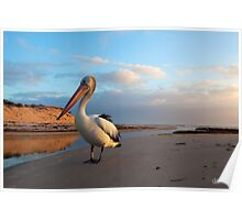 Posing Pelican at Sunset Poster