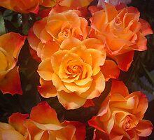 Roses by vbk70