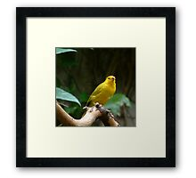 Yellow B ird Framed Print