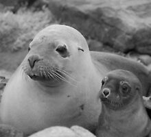 Australian sea lion mother and 2 week old pup by Sealinator