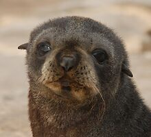 New Zealand Fur Seal pup by Sealinator
