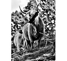 Highland Day Photographic Print