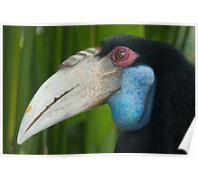 Big beak Poster