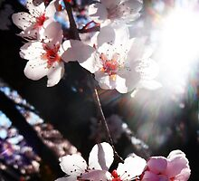 Sun Kissed by Selene Samuelsson