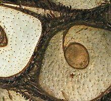 Eye Spy by MotherNature