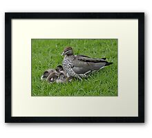 Torrens Babies Framed Print