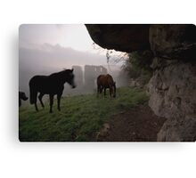 Horses and a Misty Abbey Canvas Print