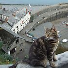 A Clovelly Cat by Chrispy1953
