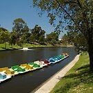 River Torrens, Adelaide by SusanAdey