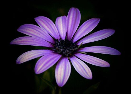 Purple Delight by Sean Jansen