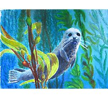 Seal in a Kelp Forest Photographic Print