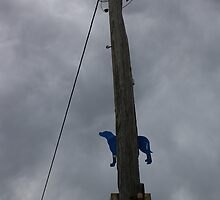 Dog up a pole! by wilsonsz