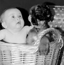 Basket of Babys by oulgundog