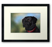 Black Lab - Dog Portrait Framed Print