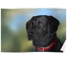 Black Lab - Dog Portrait Poster
