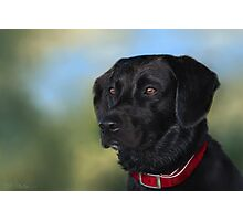 Black Lab - Dog Portrait Photographic Print