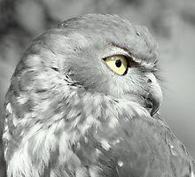 Owl by kenoth