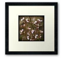 Trigger plant Framed Print