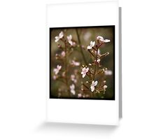 Trigger plant Greeting Card